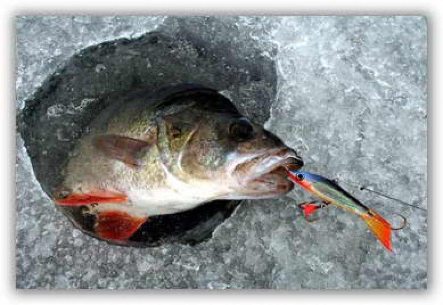 Рыбалка балансиры на окуня
