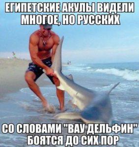 ВауДельфинчик